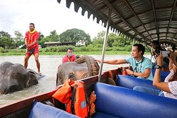 ชมช้างอยุธยา