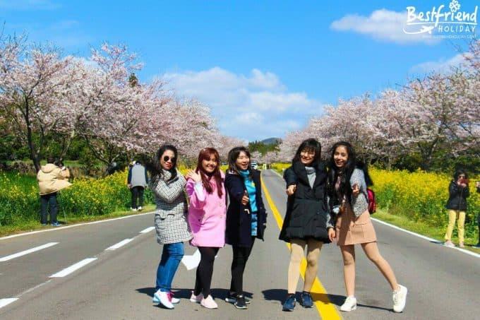 ดูงานเกาหลี