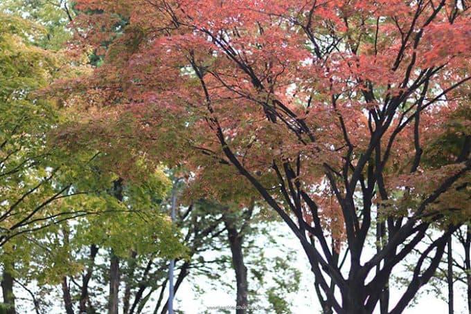 เกาหลีใบไม้เปลี่ยนสี