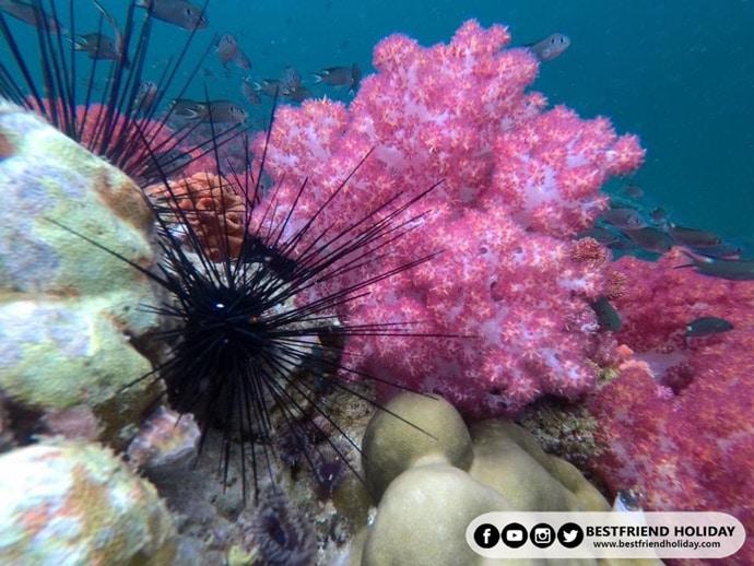 ปะการังเจ็ดสี