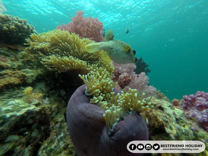 ปะการัง7สี